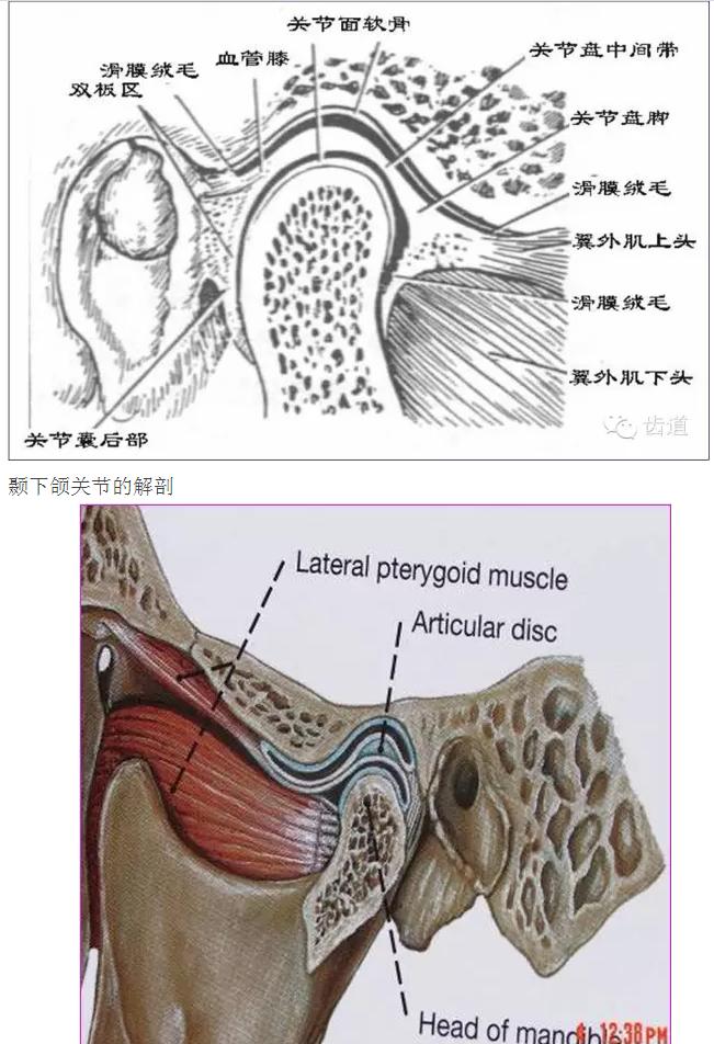 滑膜关节的辅助结构