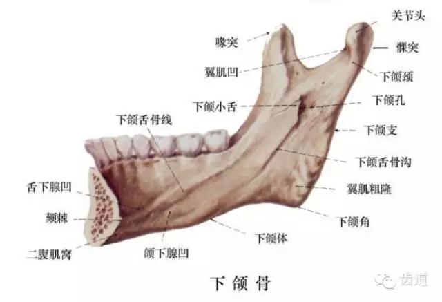 脖子骨骼部位图解